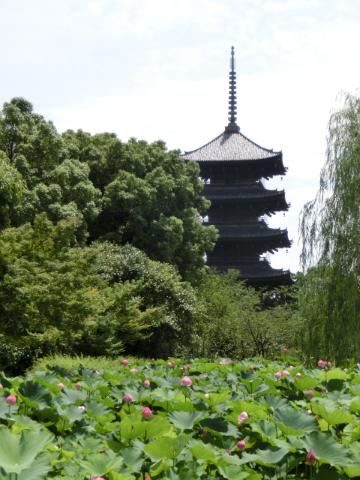 写真:東寺の塔を蓮池越しに望む