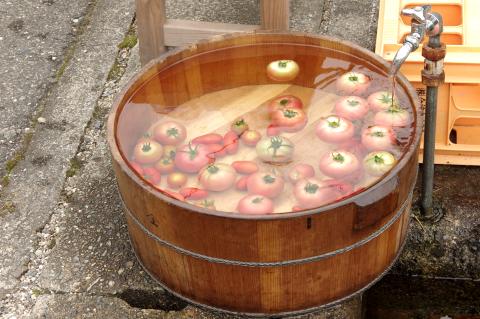写真:木桶によく冷えた「南郷トマト」とミニトマト「アイコ」