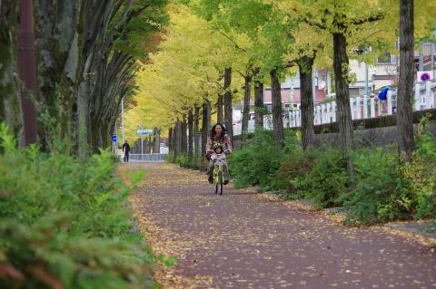 写真:けやき並木を走りぬけるタンデム