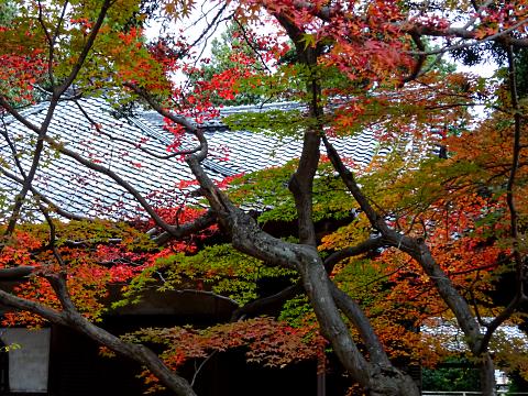 写真:神光院の紅葉