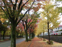 写真:洛西ニュータウン・西竹の里の並木道
