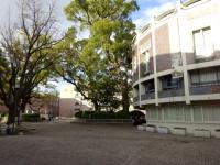 関西大学の村野藤吾
